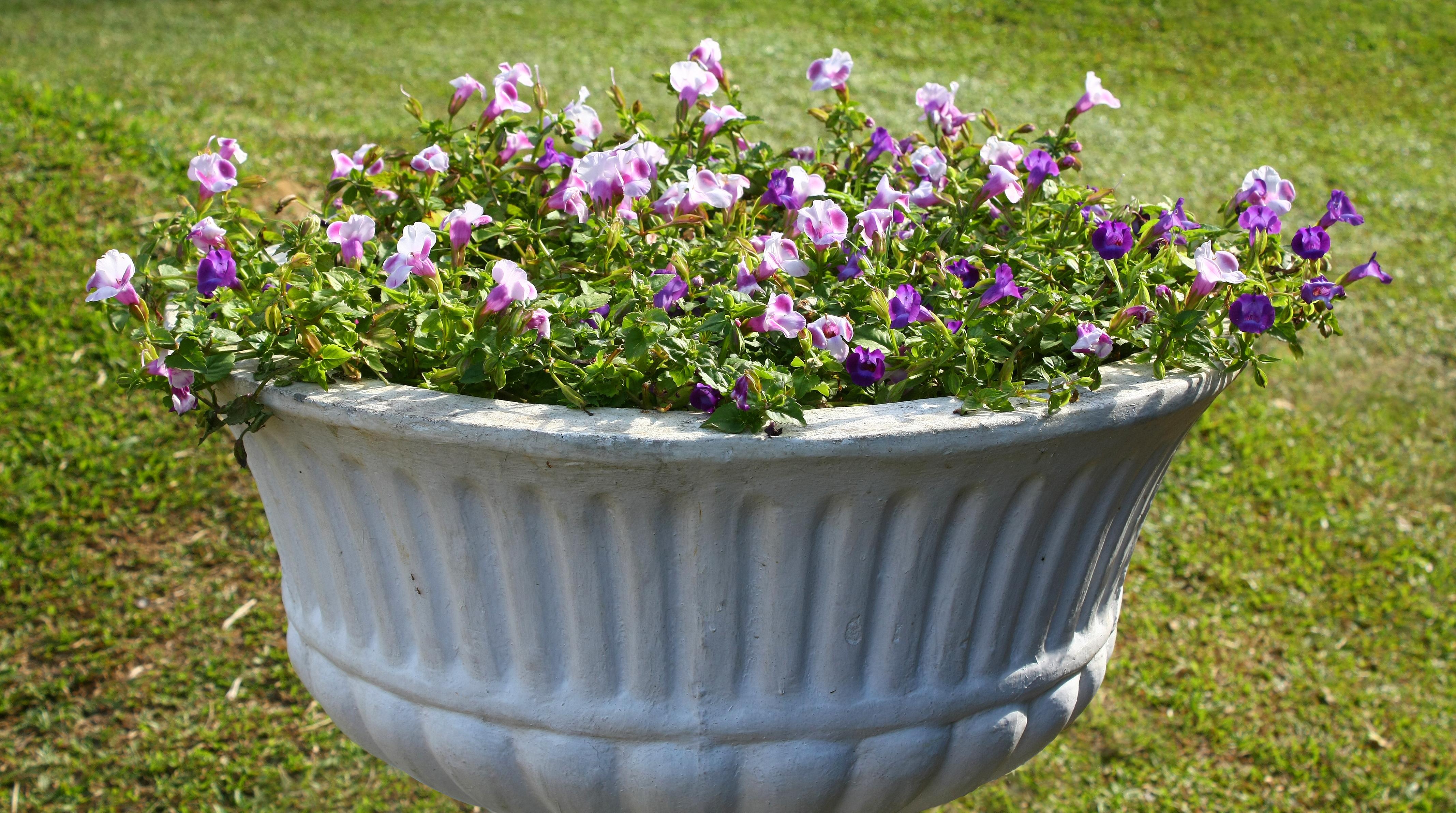 Wikiwand & Flowerpot - Wikiwand