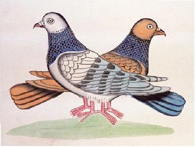 File:Una ilustración del manuscrito Akbarnama..jpg