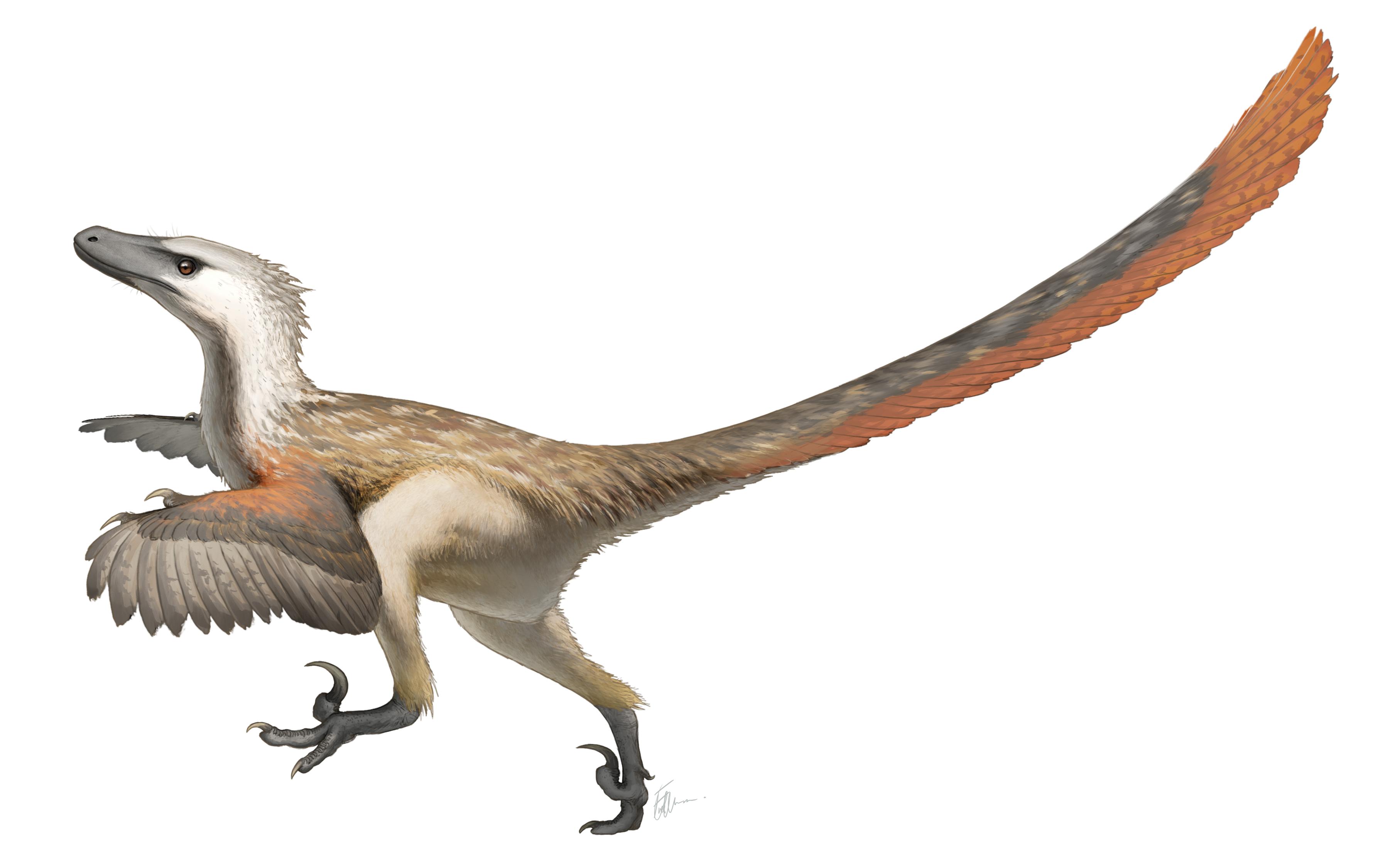 Dinosaurio-raptor-plumas-cuerpo