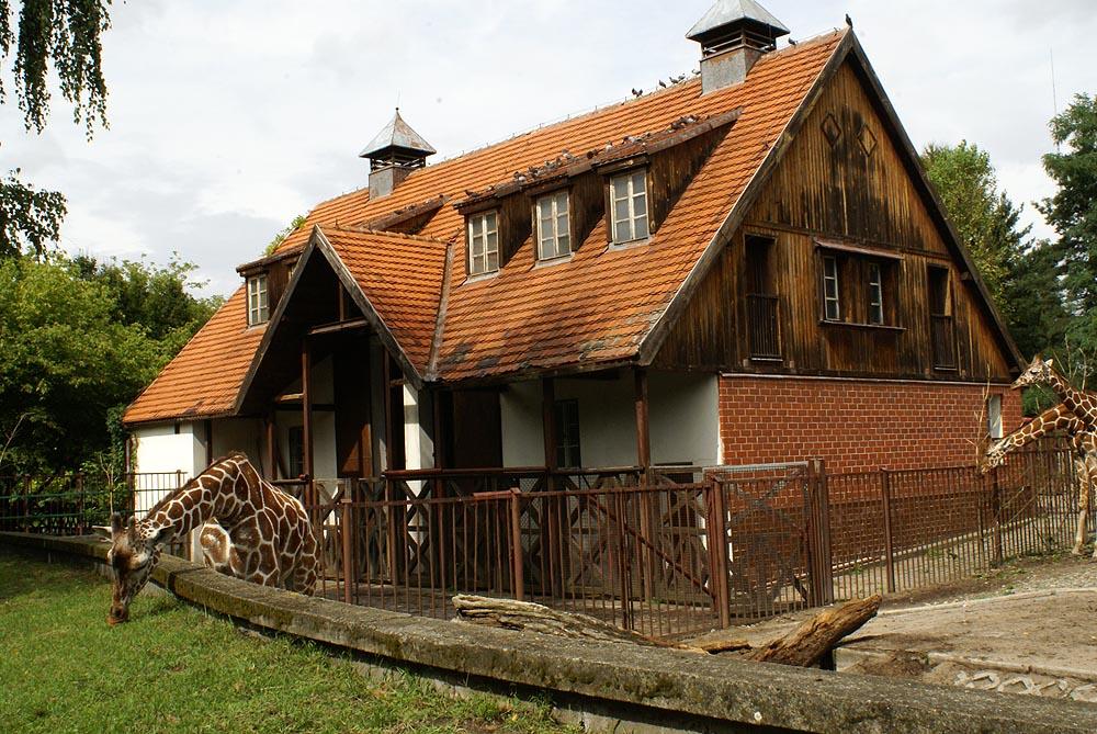 Wrocławskie ZOO Żyrafiarnia