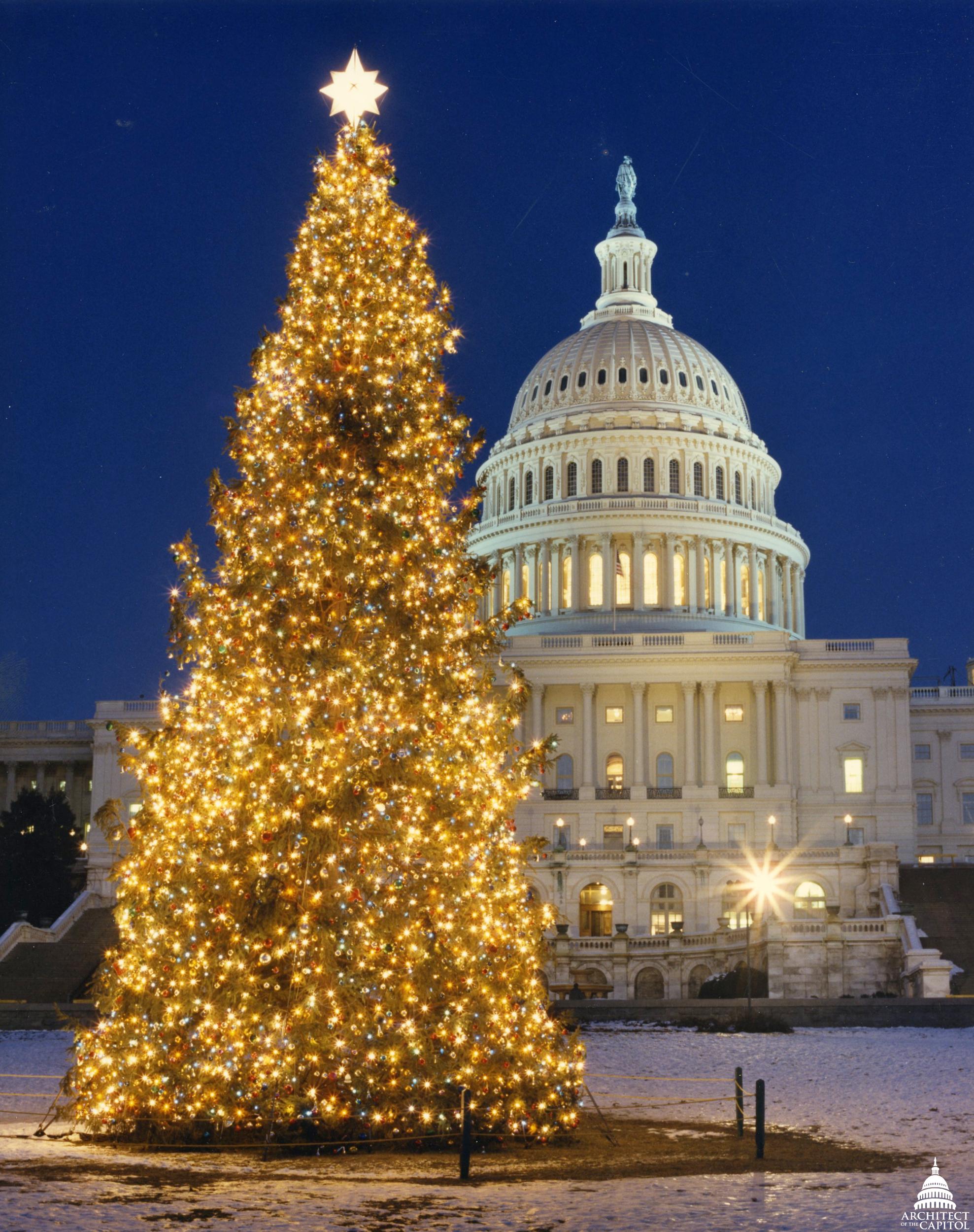 file1989 us capitol christmas tree 31432739050jpg