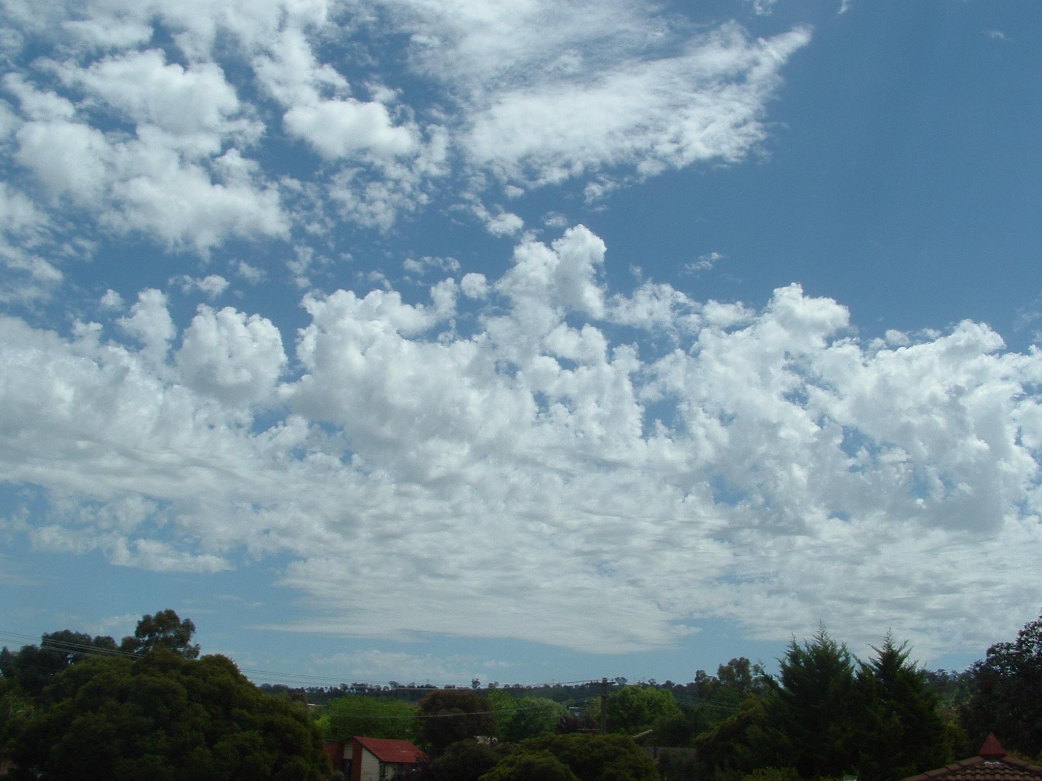 Castellanus – Wikipedia