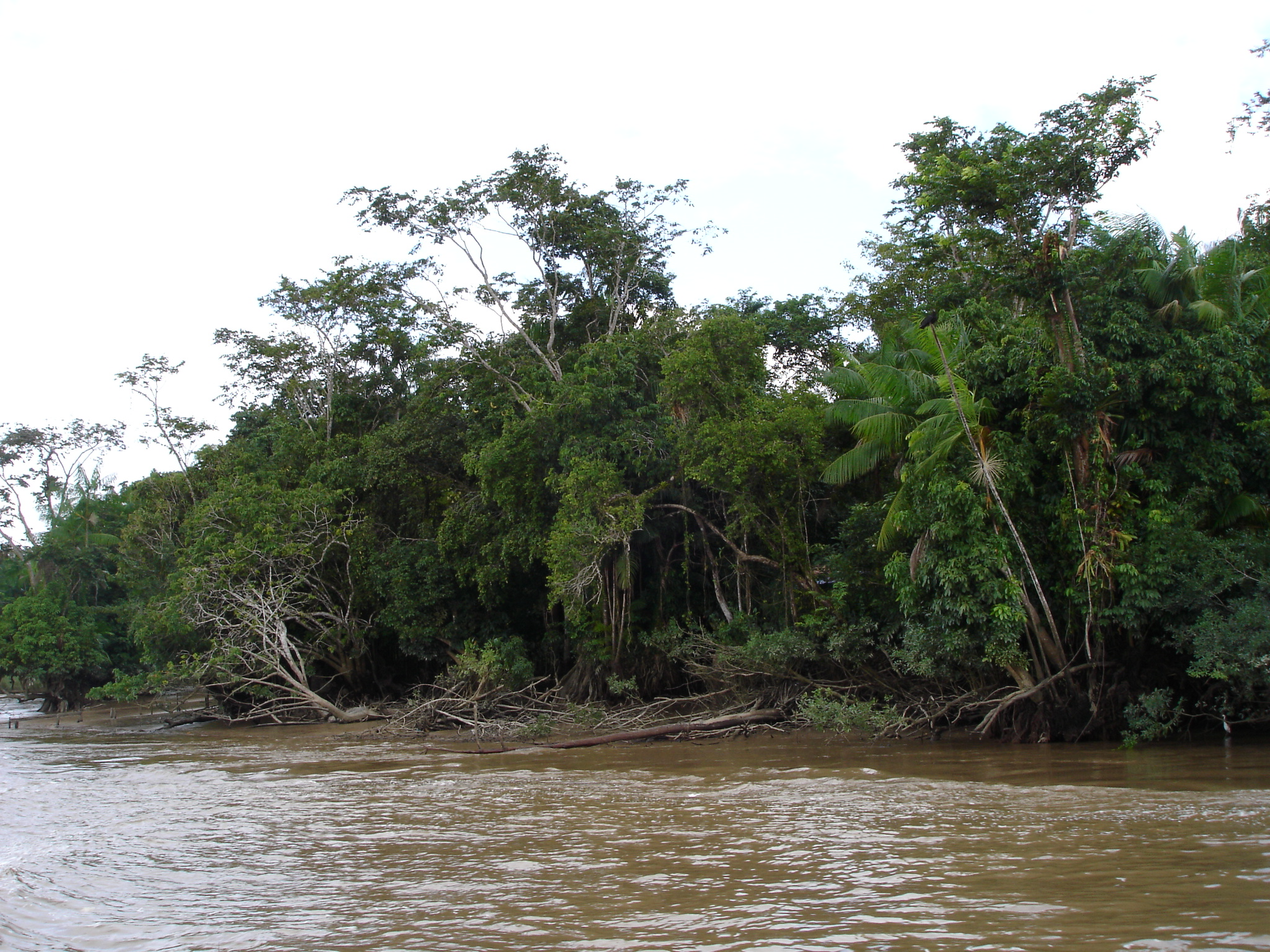 File:Amazon river.JPG  Wikimedia Commons