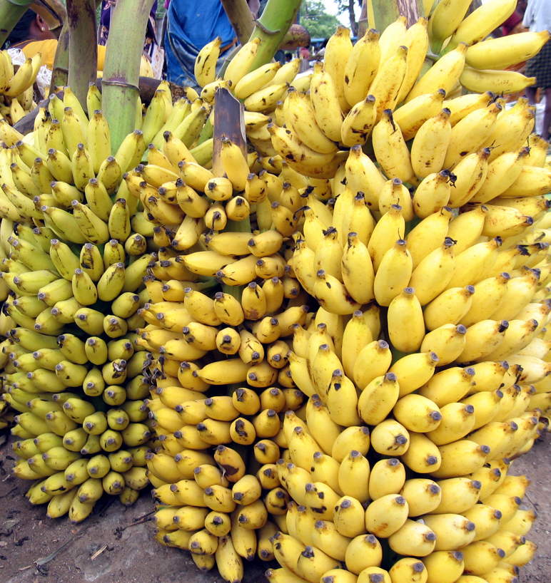 http://upload.wikimedia.org/wikipedia/commons/5/56/Banana_bunch_India_Tamil_word_15.jpg