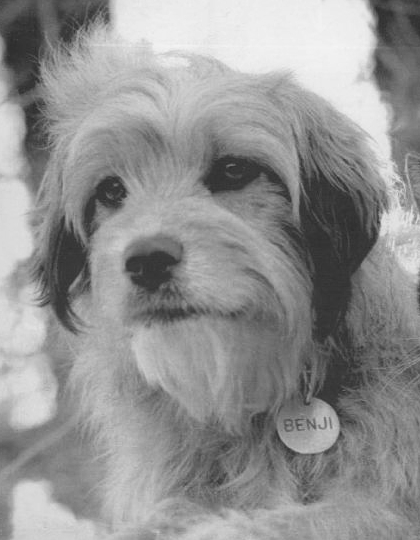Image Result For Can Dogs See