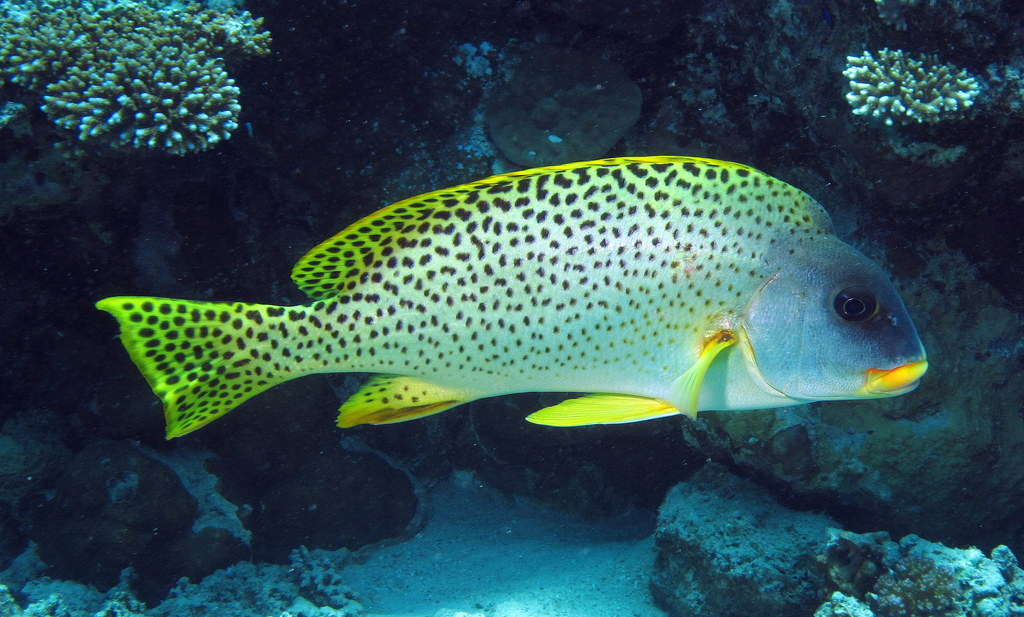 deep sea fishing dubai