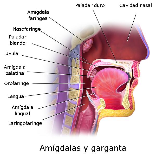 Como saber si tienes las amigdalas inflamadas