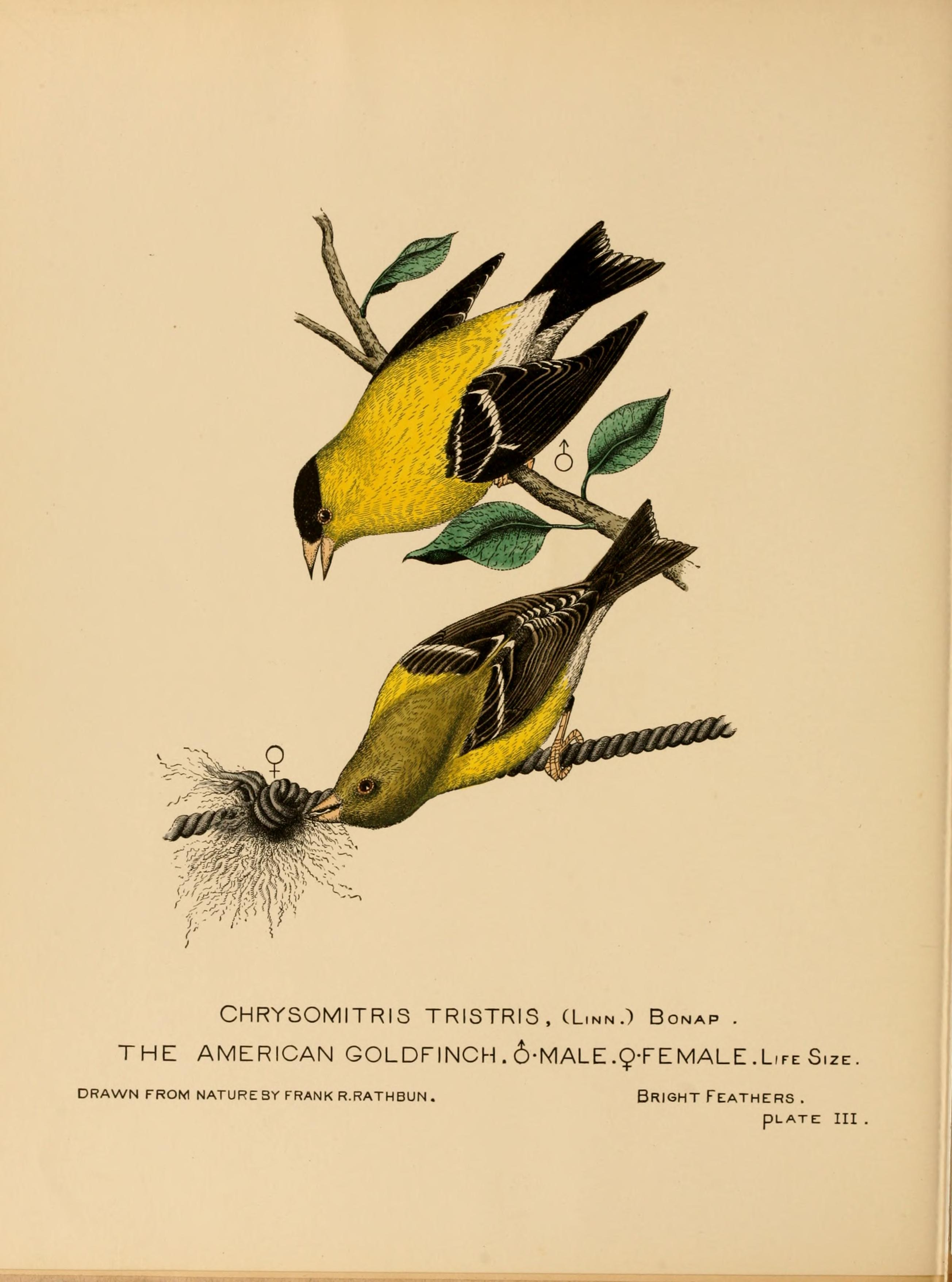 Image result for north american birds