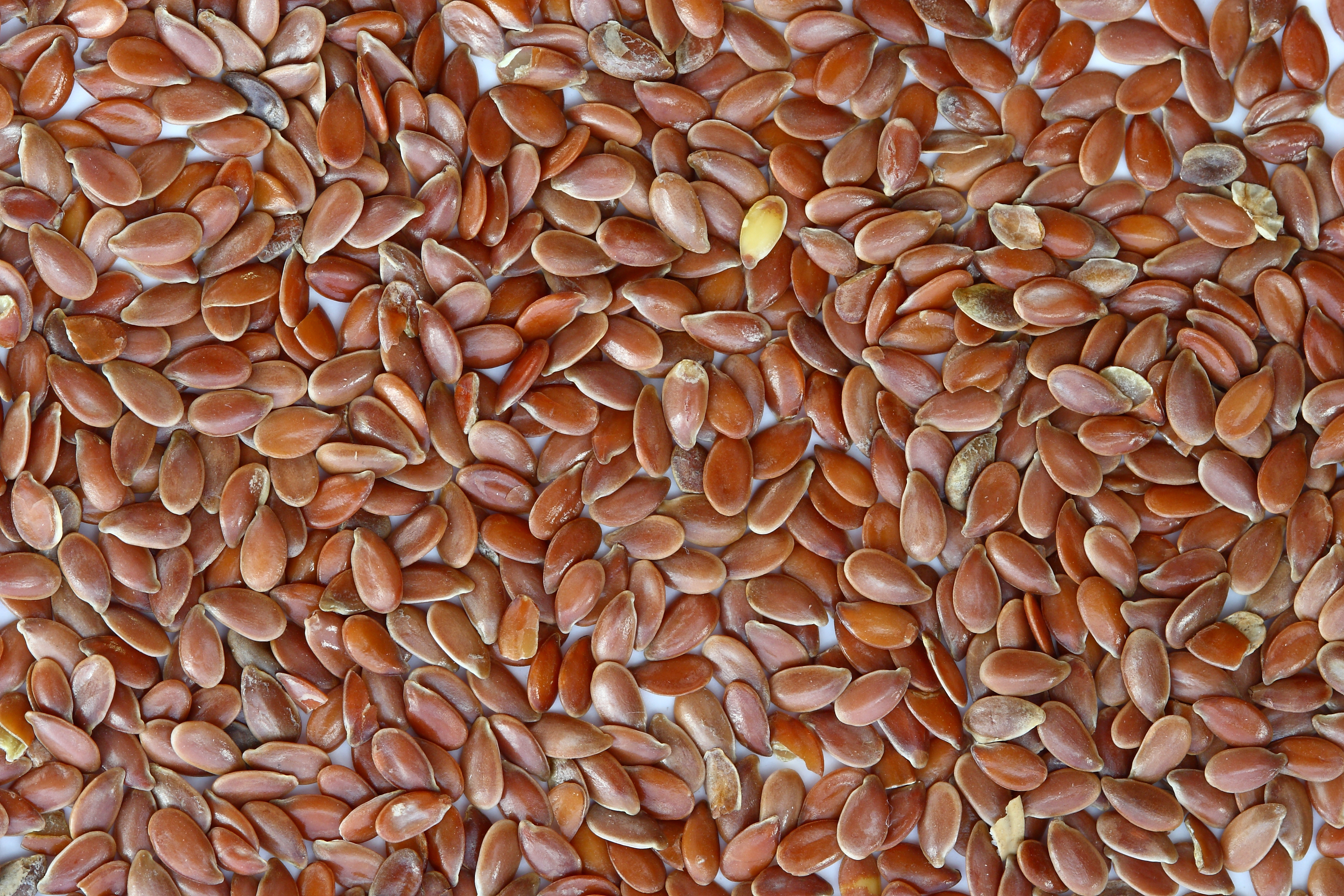 Flax seeds contain Omega-3 Fatty acids, and are an important supplement for wellness and healthy aging