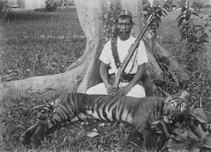 File:COLLECTIE TROPENMUSEUM Man poseert naast een geschoten Sumatraanse tijger TMnr 60028957.jpg