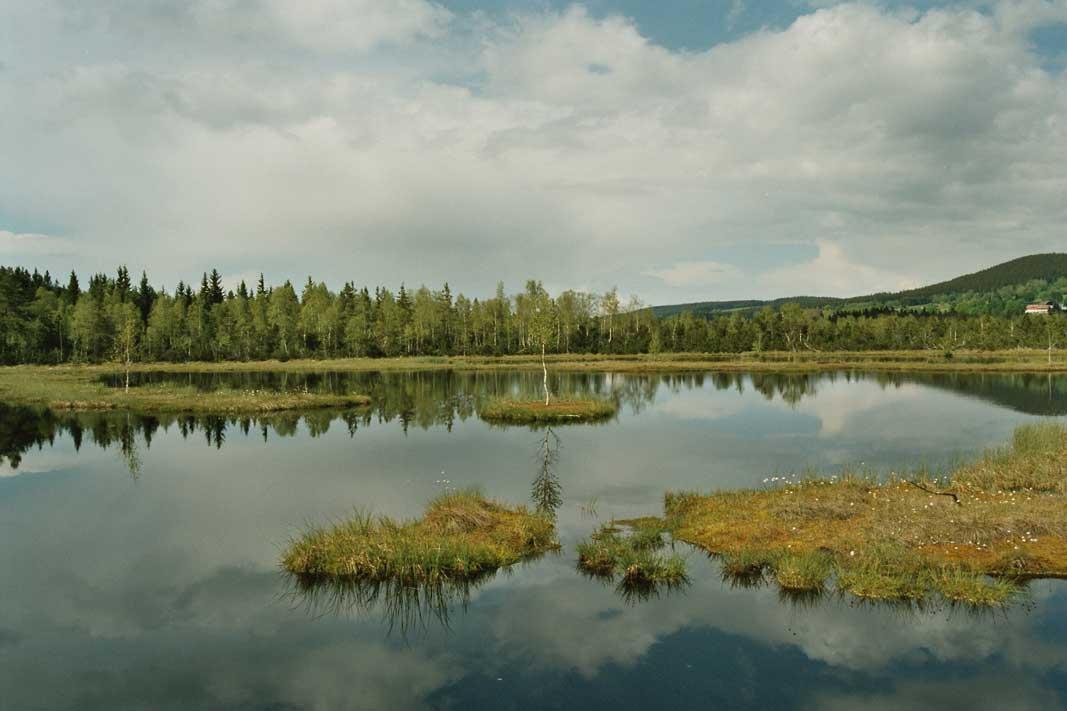 Připojte lesní jezero