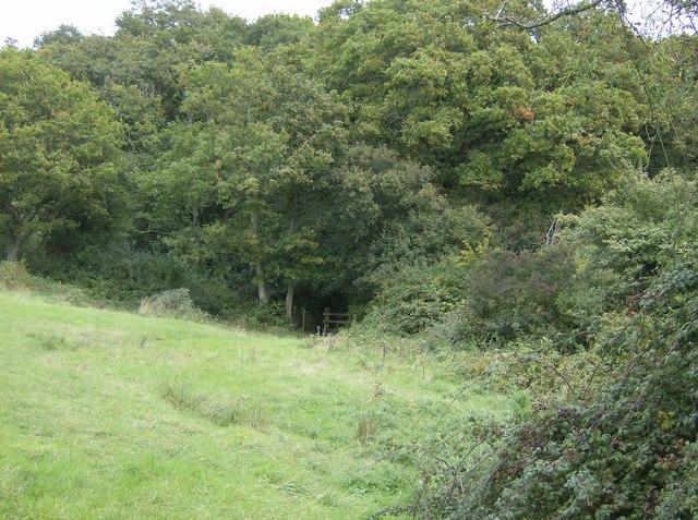 Entering Parkhurst Forest - geograph.org.uk - 571867