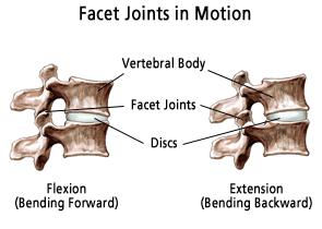 Facet definition anatomy