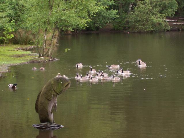 File geese and sculpture of a fish on coppice pond for Pond fish uk