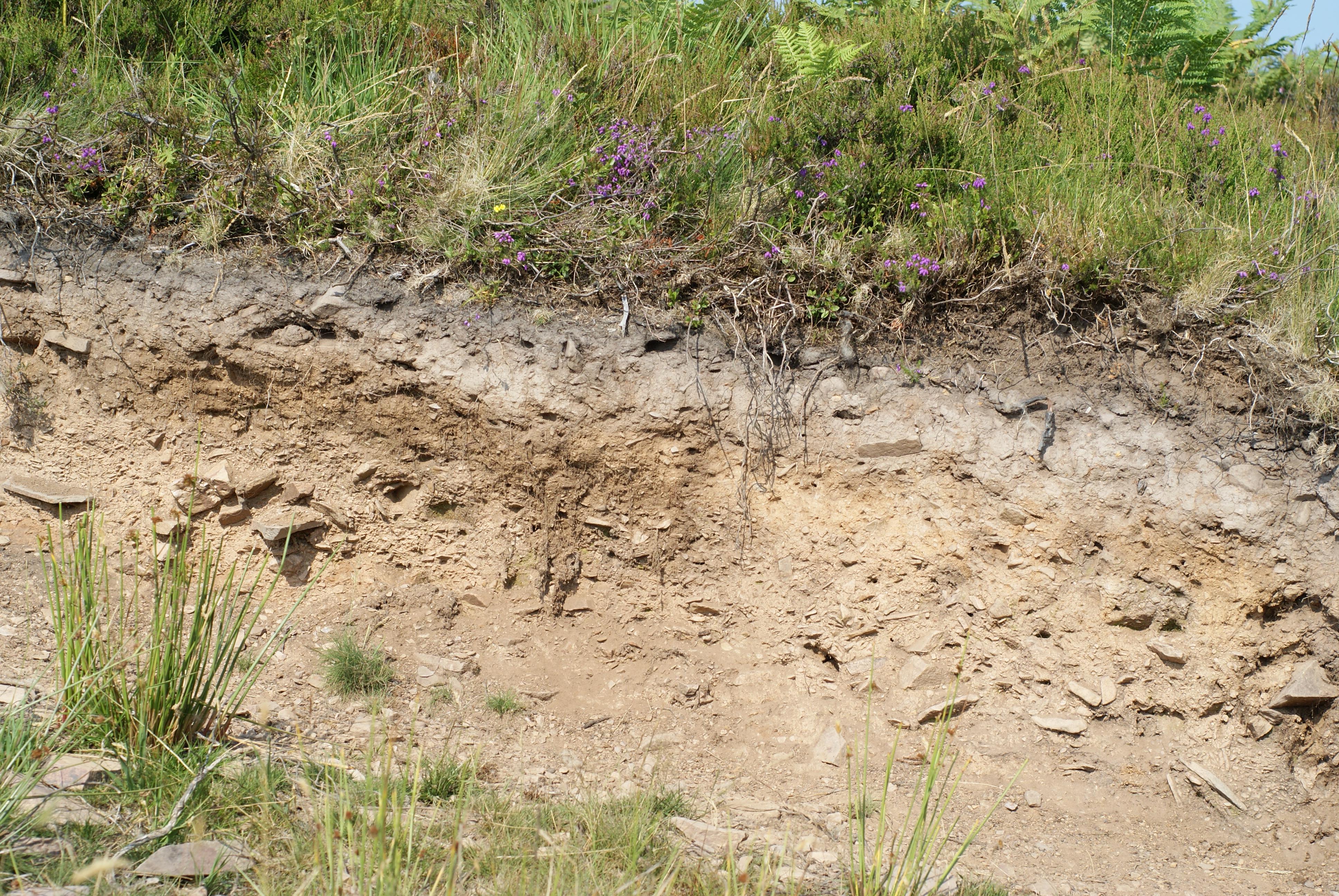 File heather soil profile badgworthy hill devon england for Soil description