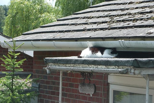 It's a cat's life - geograph.org.uk - 881206 - picture of cat on roof