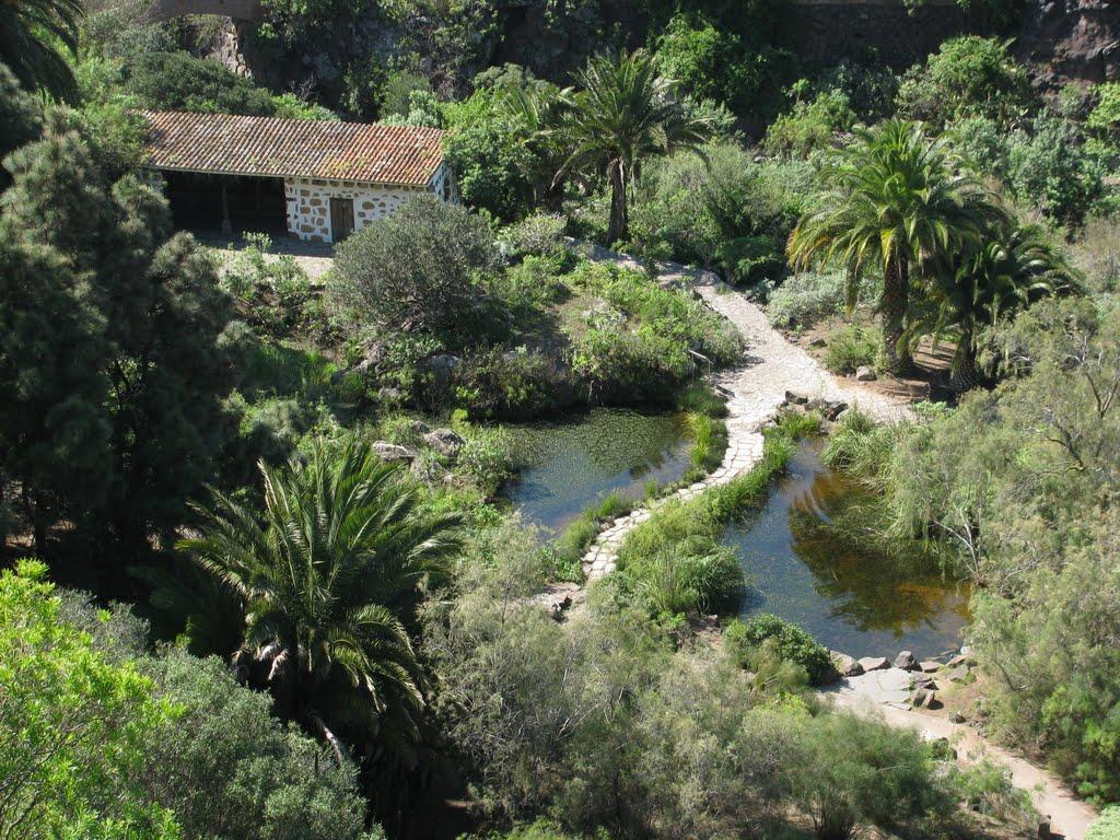 file jardin canario gran wikimedia commons