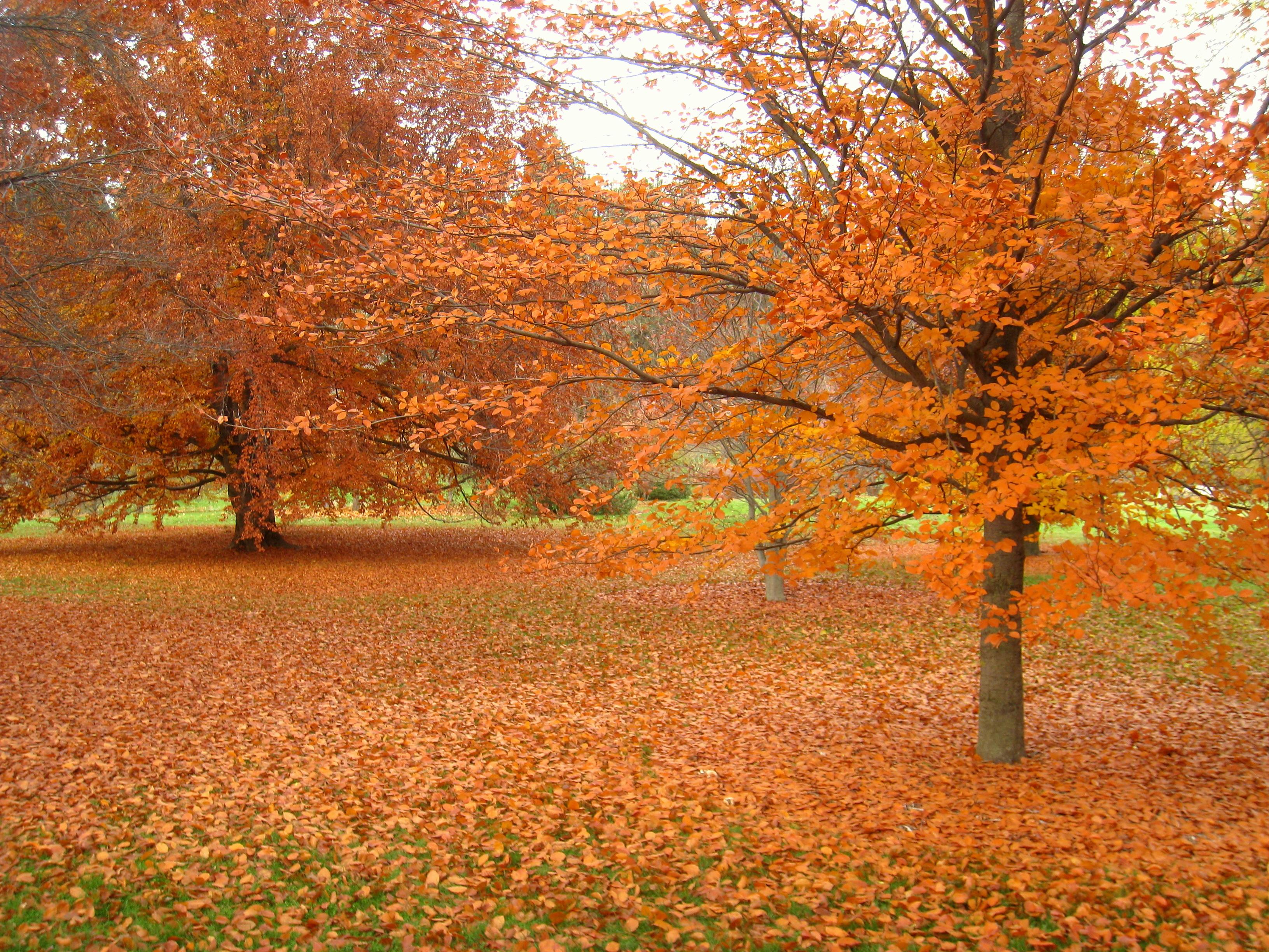 John finch arboretum