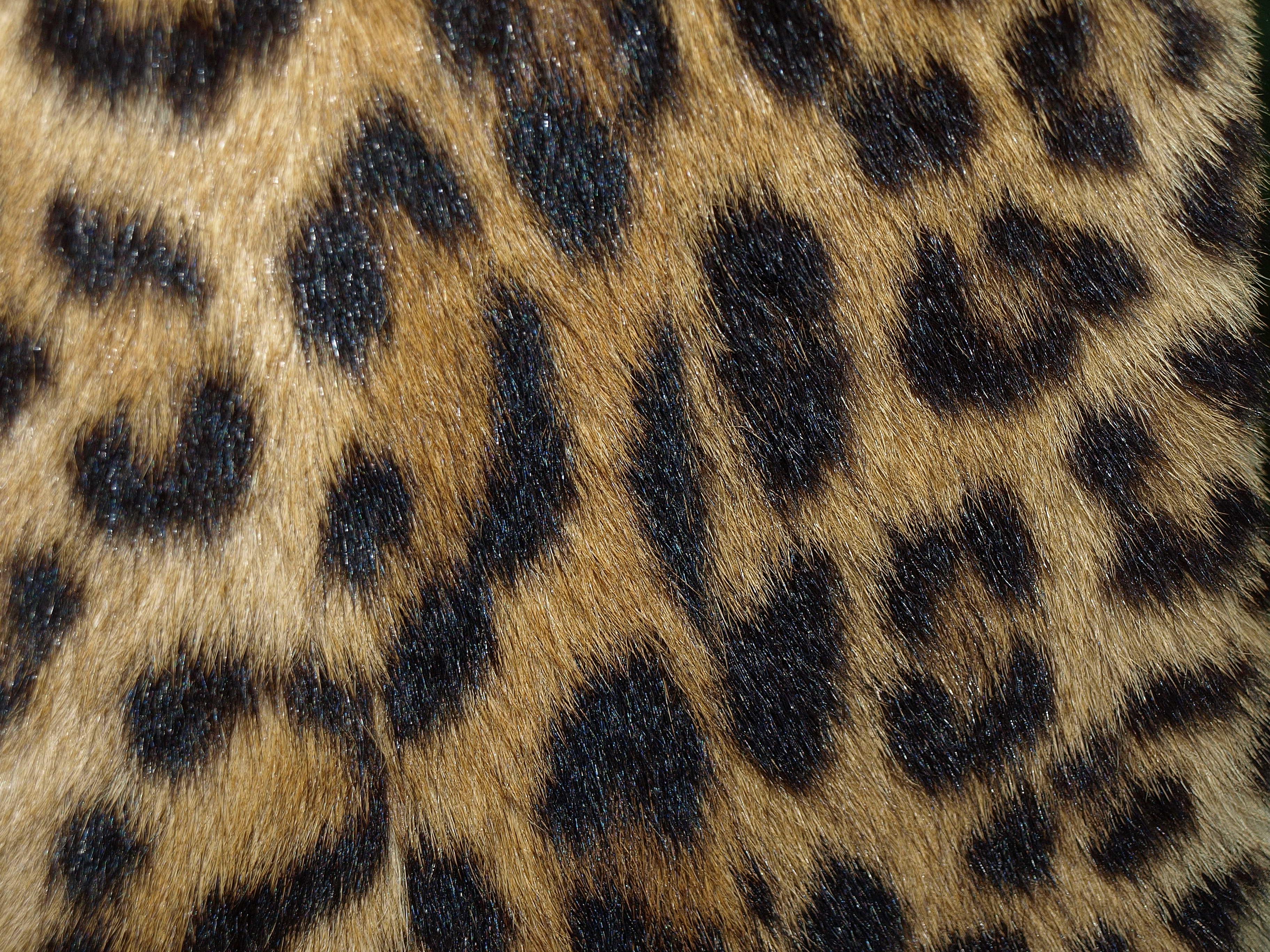 приехал загорелый картинка кожа леопарда была самой