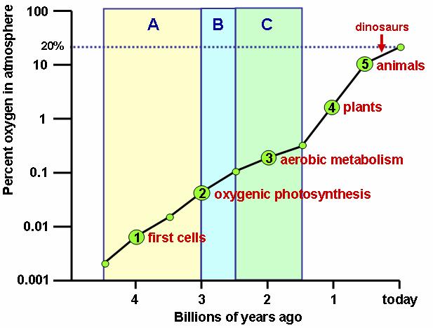 The evolution towards photosynthesis