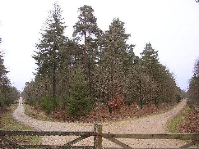 Pignal Inclosure from Standing Hat, New Forest - geograph.org.uk - 121302