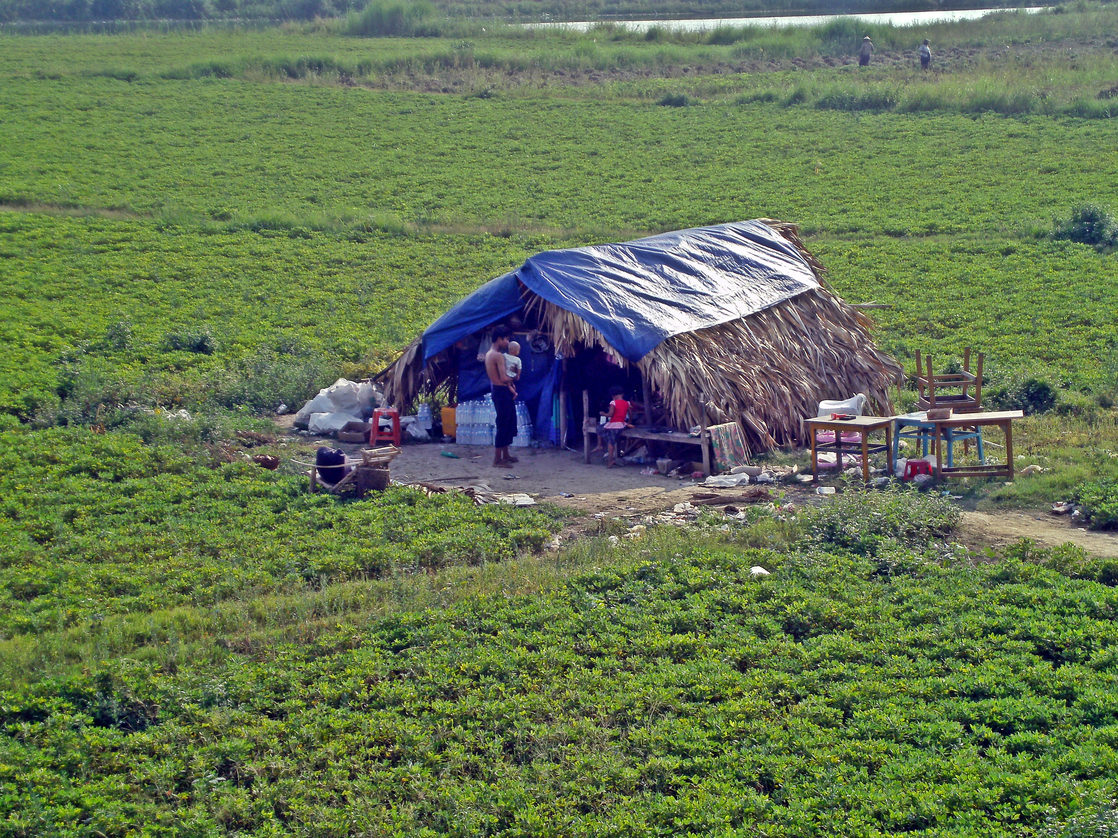 Image result for myanmar farm
