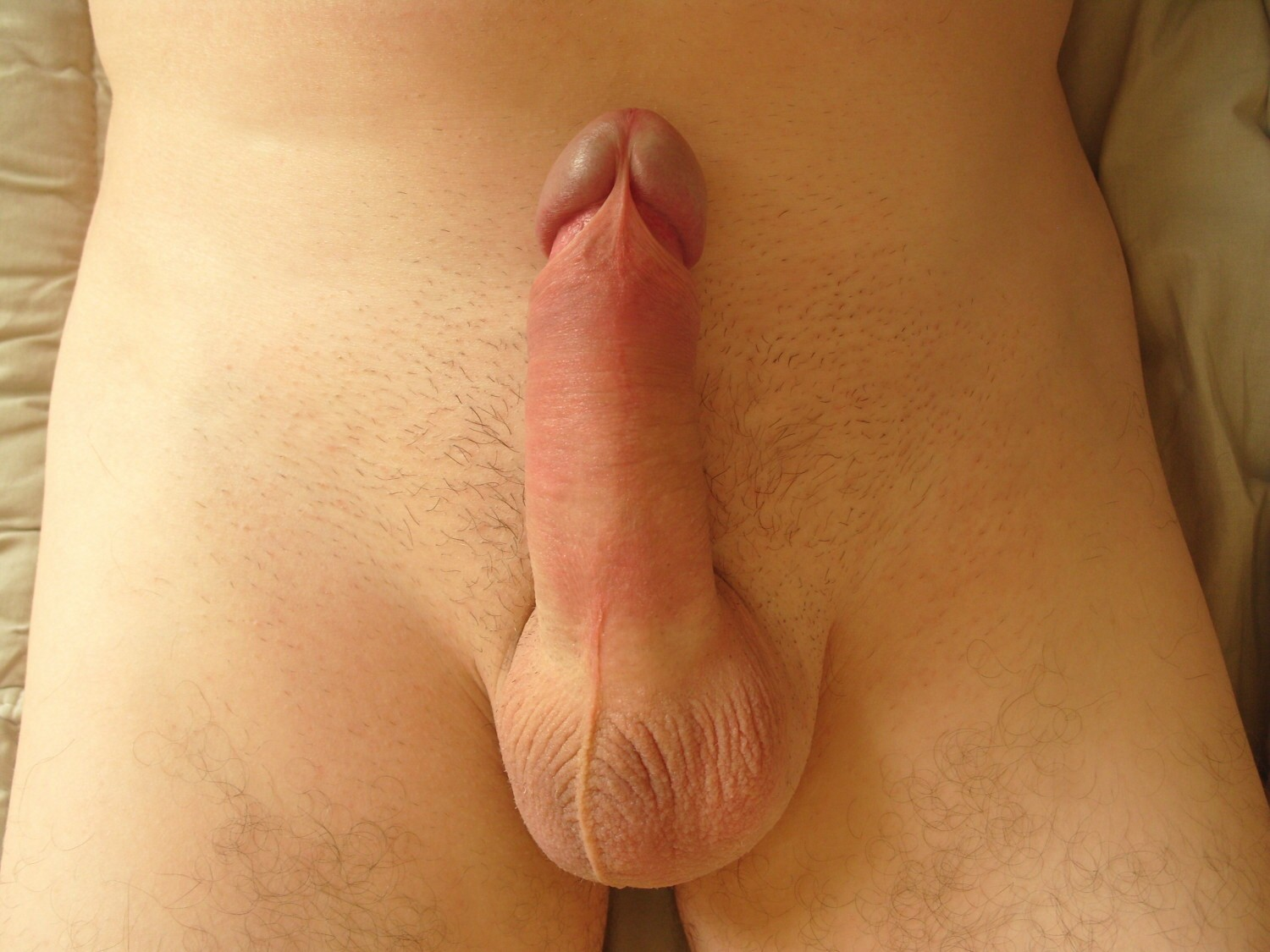 Erect penis during sex