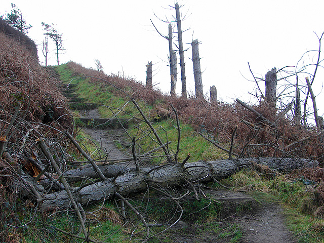 Shattered treescape above Clarach Bay - geograph.org.uk - 1166656