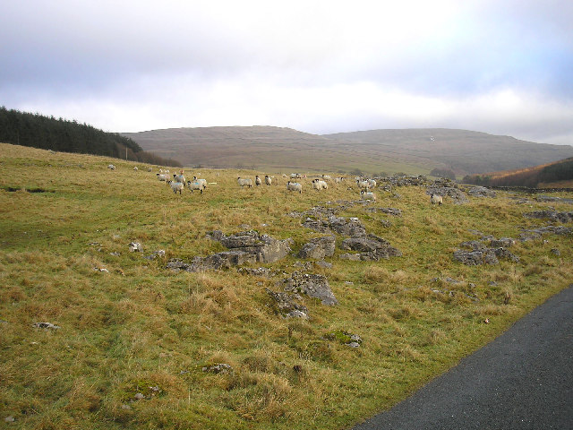 Sheep and rocks - geograph.org.uk - 101837