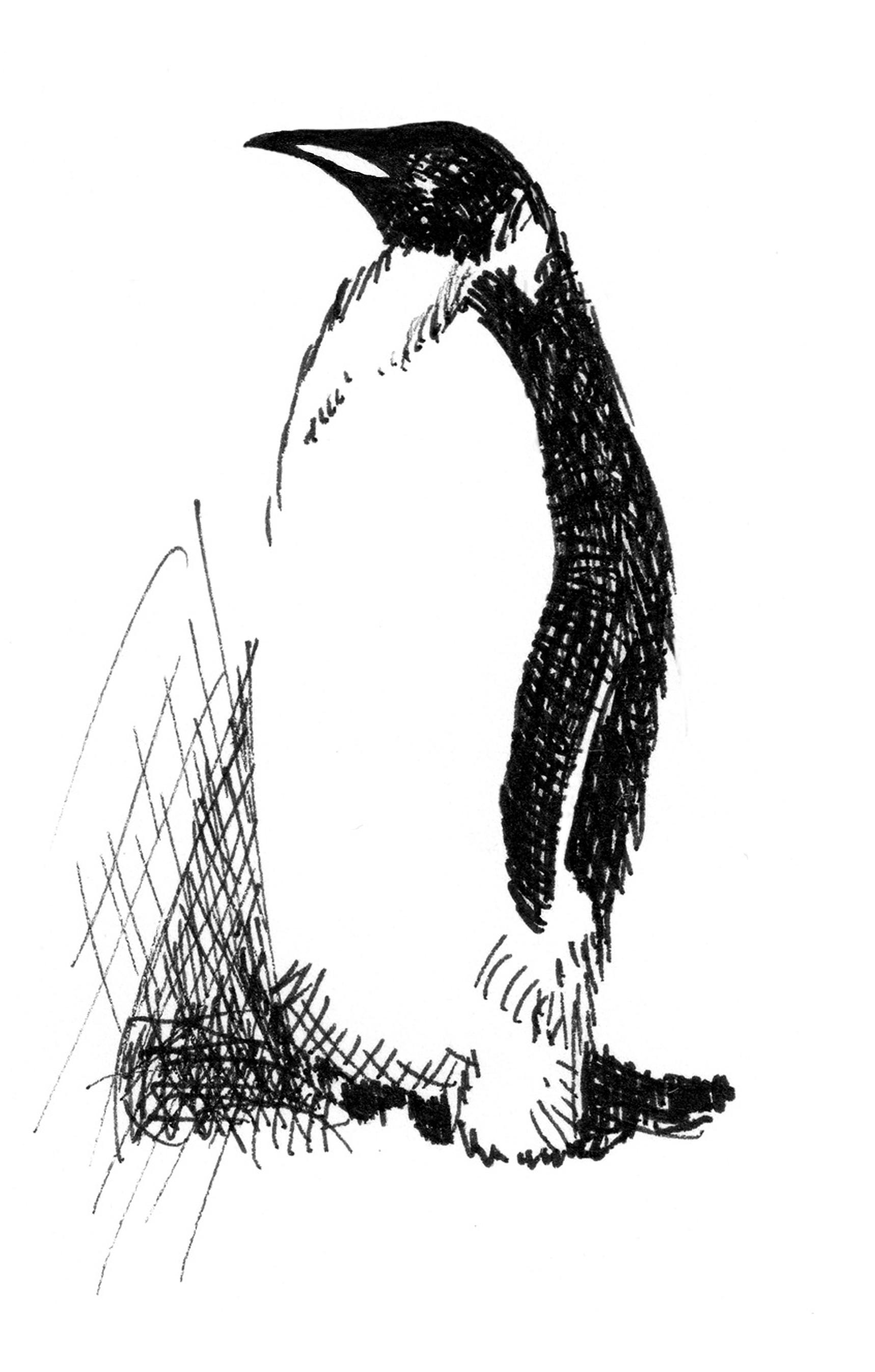 Image Result For Emperor Penguin Coloring