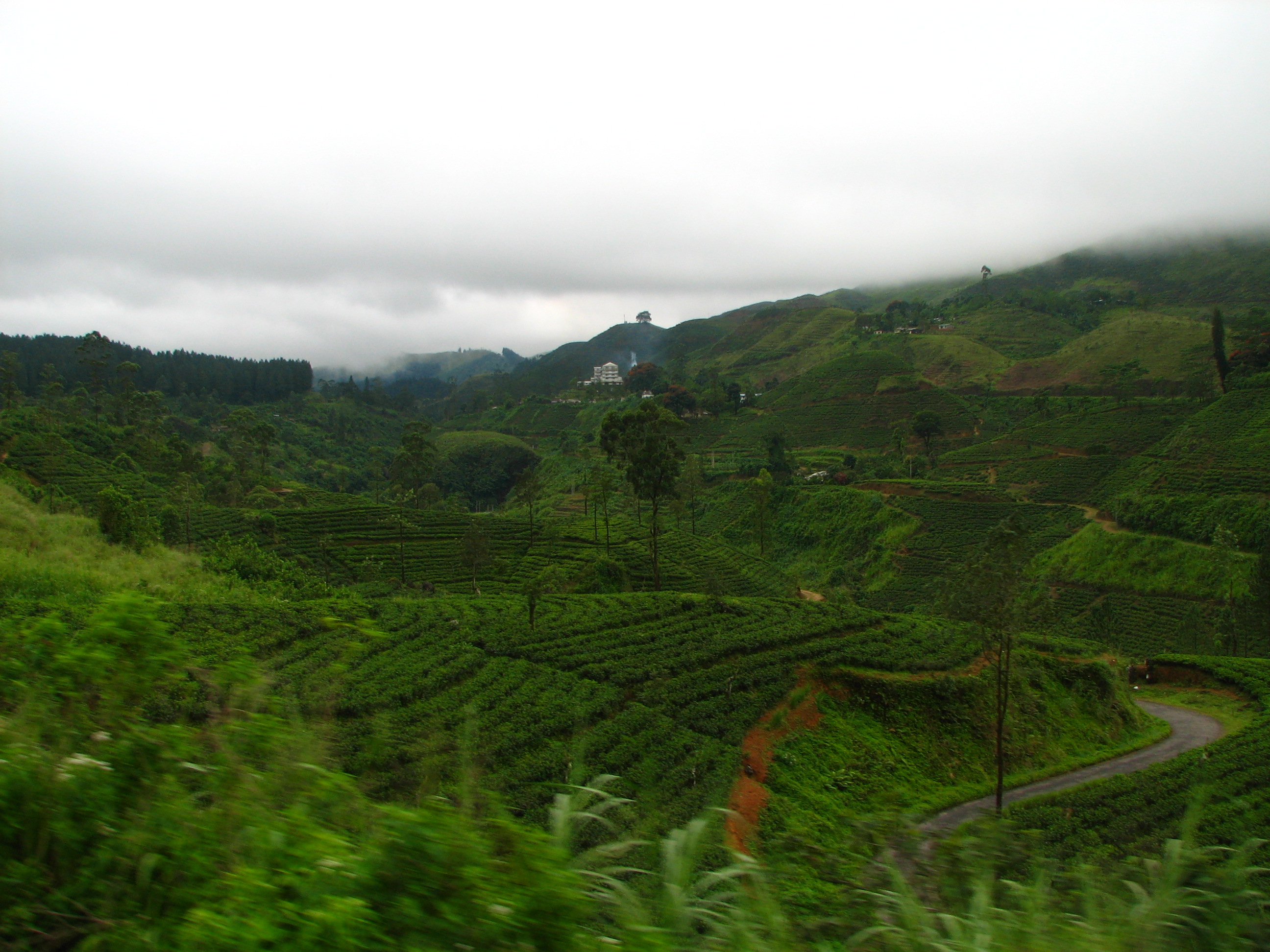 The Position Of The Tea Area And The Tea Supplier