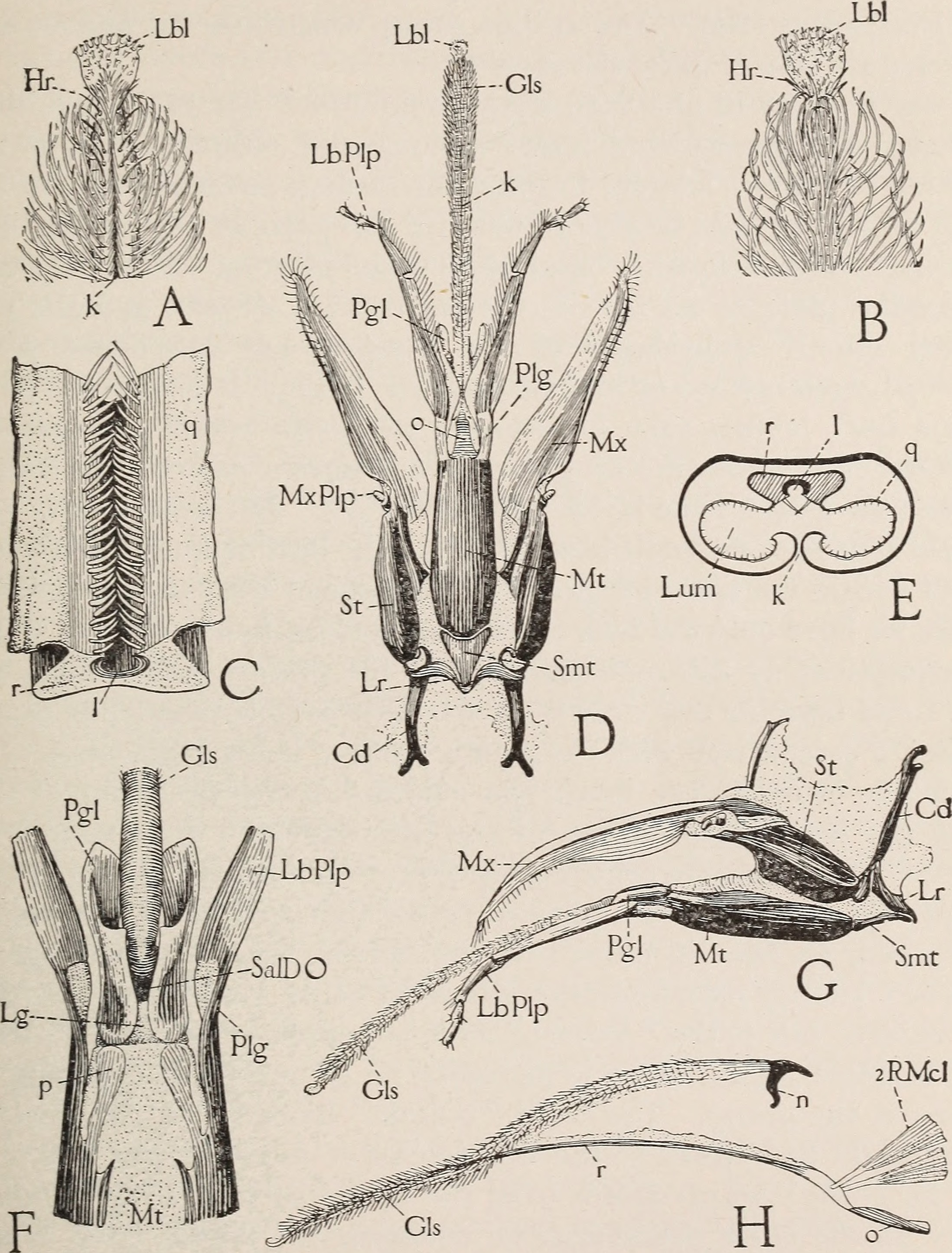 File:The anatomy of the honey bee (1910) (18190887462).jpg ...