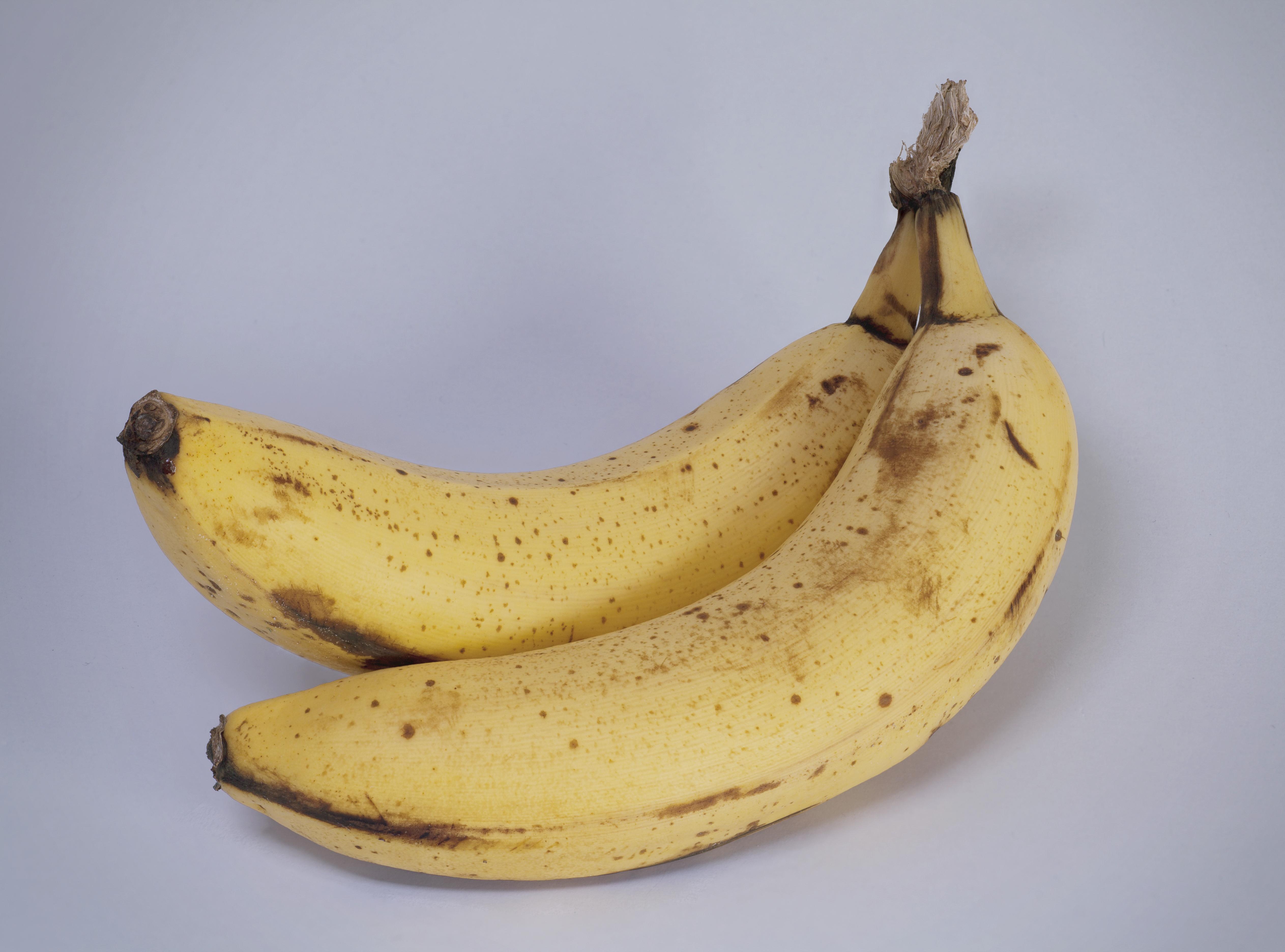chardakovs banana experiment essay