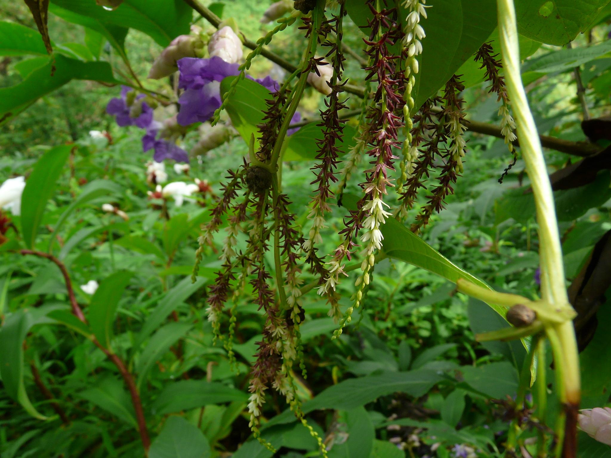 Kunda Flower In Marathi | Best Flower Site
