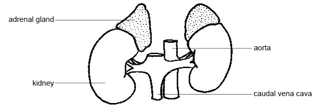 Anatomy and Physiology of Animals/Endocrine System - Wikibooks, open ...