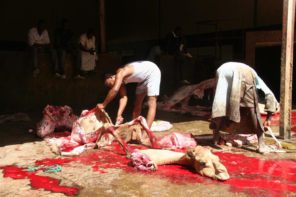 Camel_slaughter.jpg