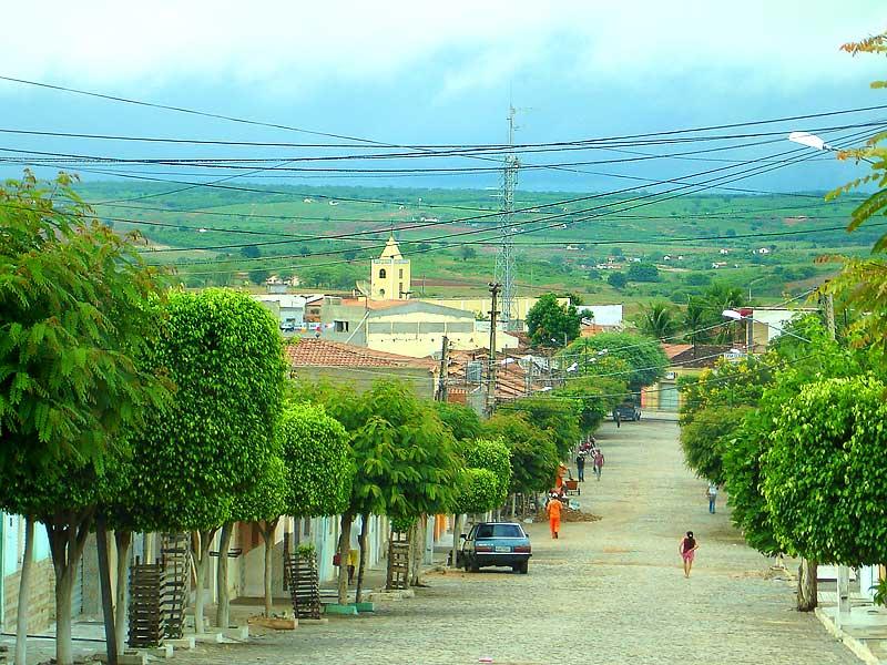 Cedro Pernambuco fonte: upload.wikimedia.org