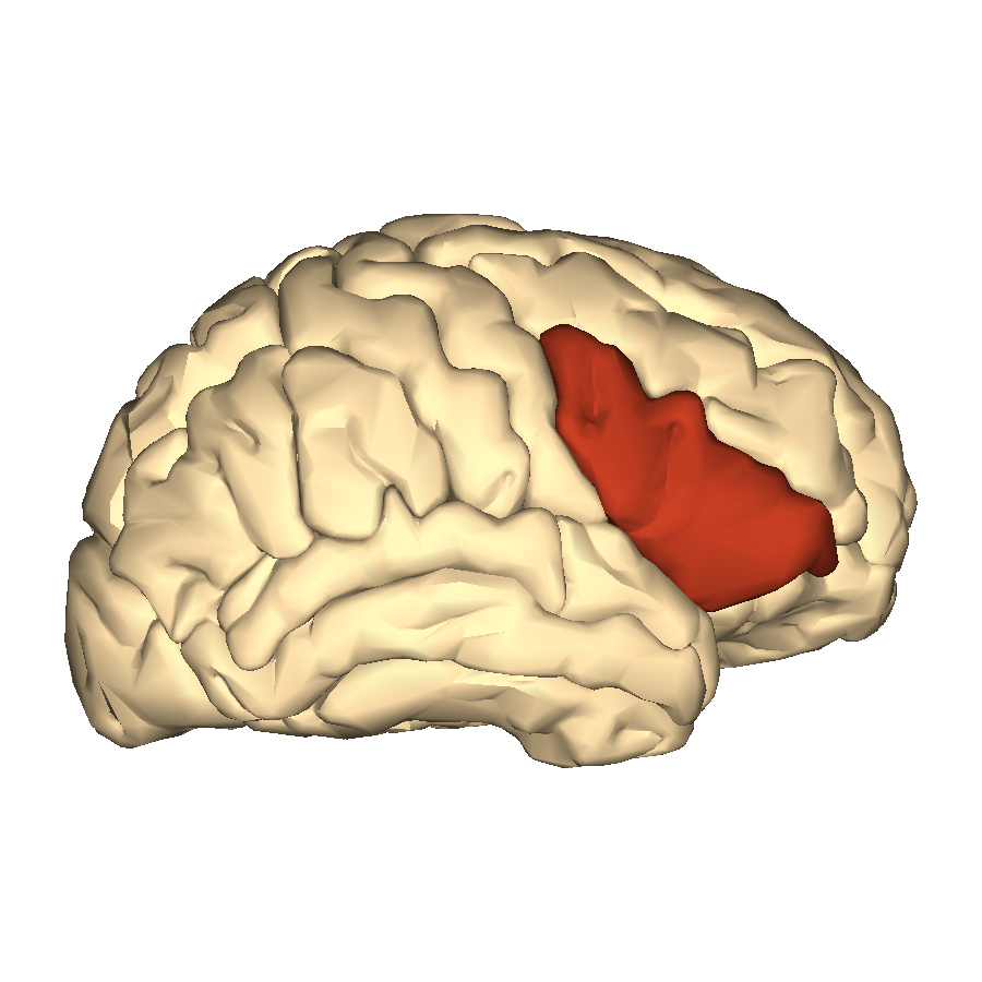 Filecerebrum Inferior Frontal Gyrus Lateral Viewg