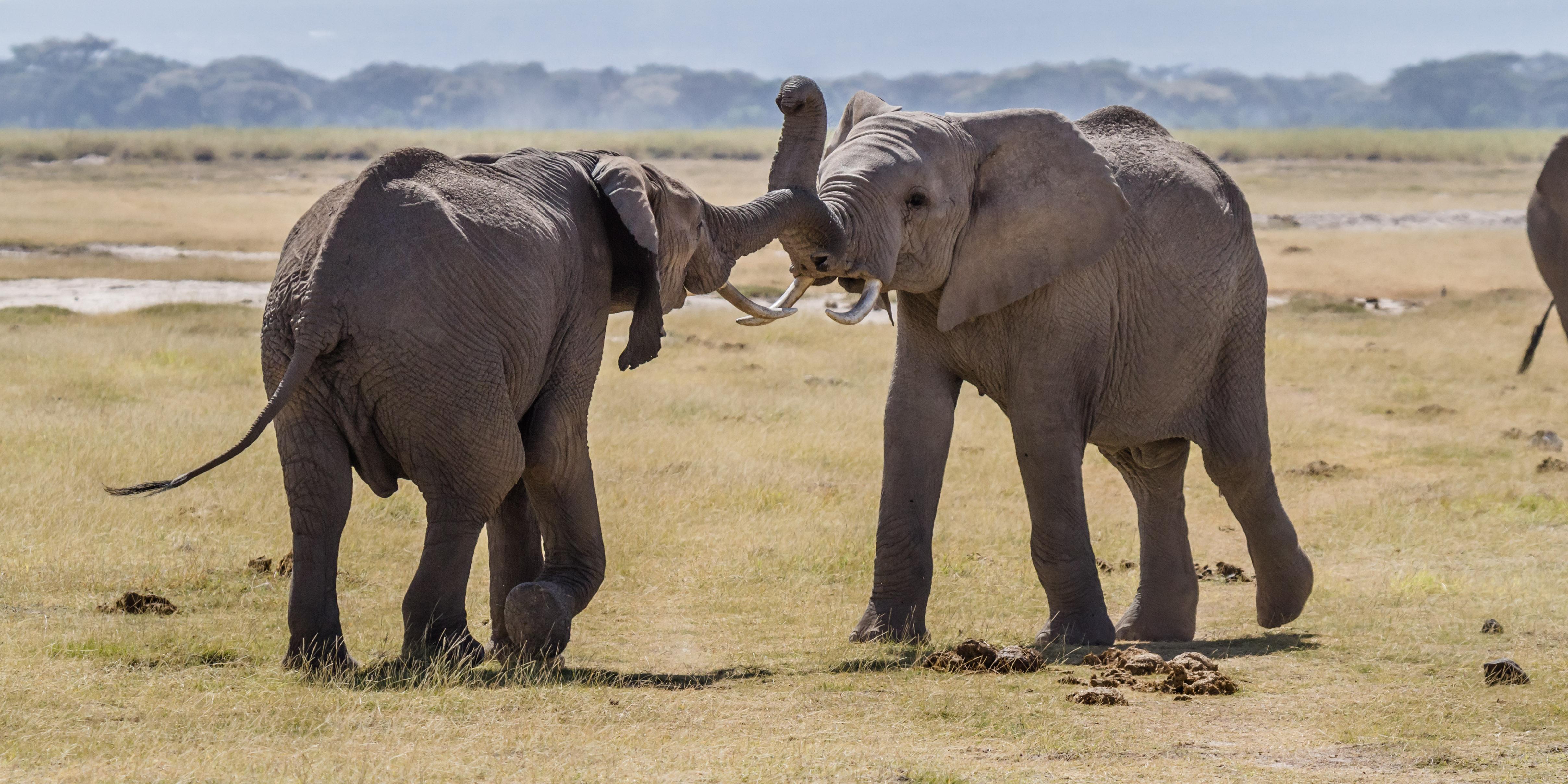Internet of Things, Elephants