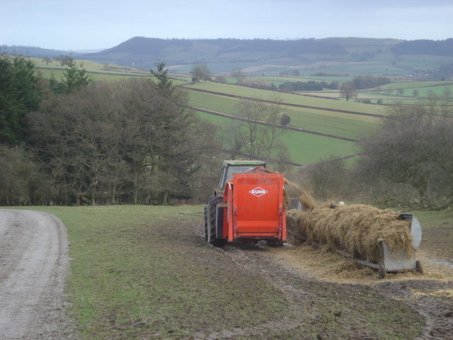 Feeding time near Hill Coppice - geograph.org.uk - 654072