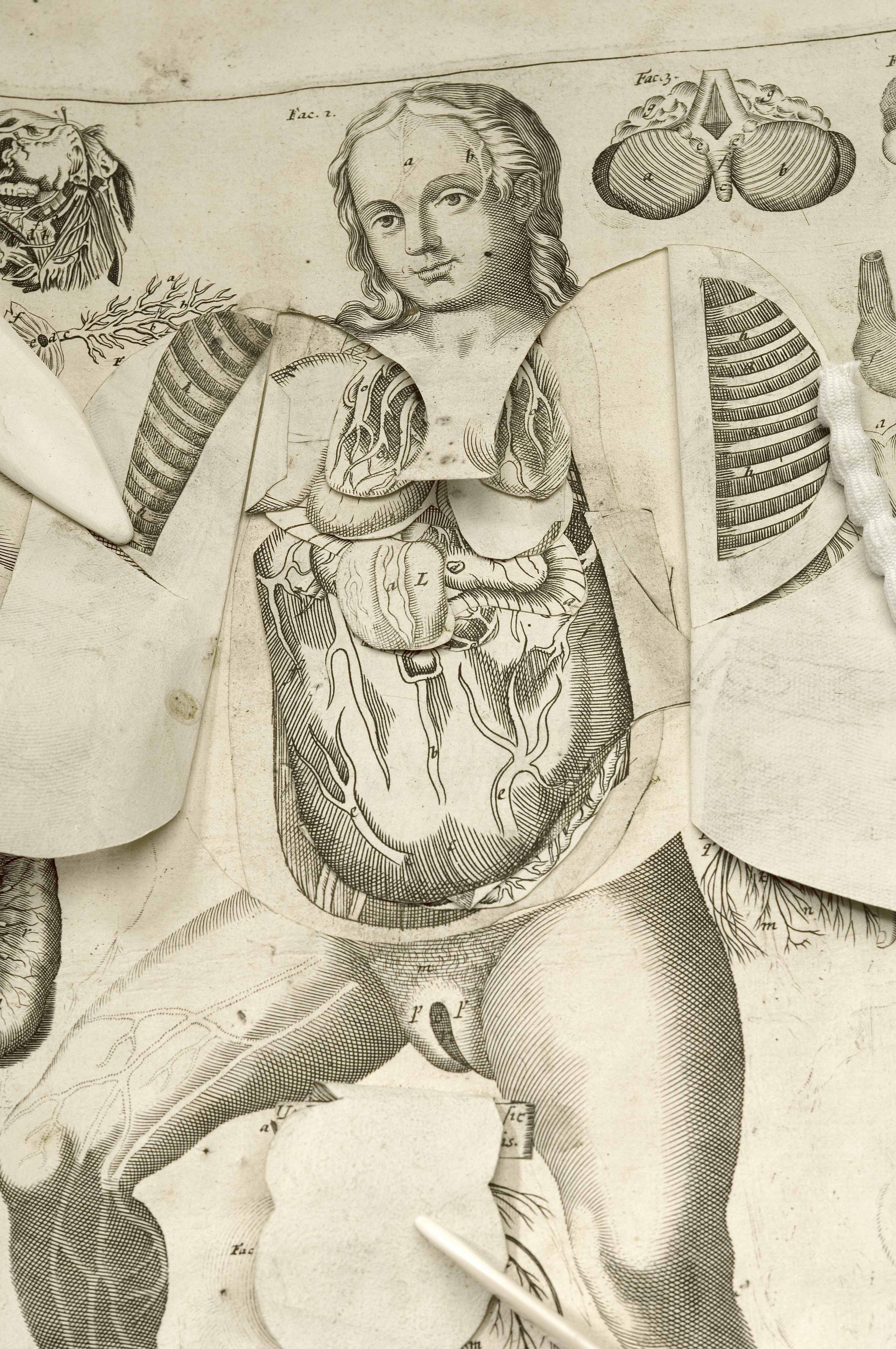 File:Female anatomical figure, with view of internal organs Wellcome ...