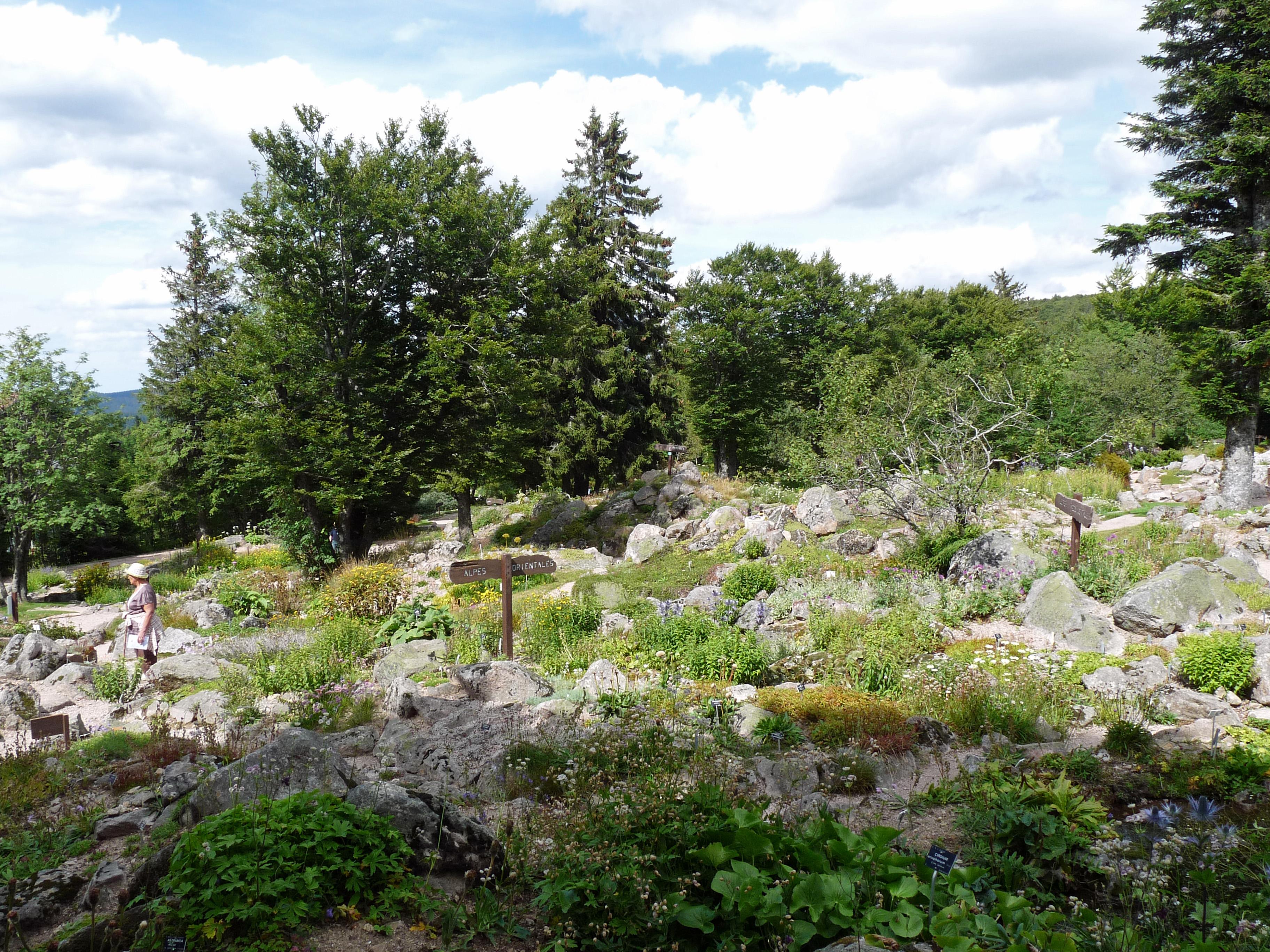 File flore des alpes orientales jardin d 39 altitude du haut - Jardin d altitude du haut chitelet ...