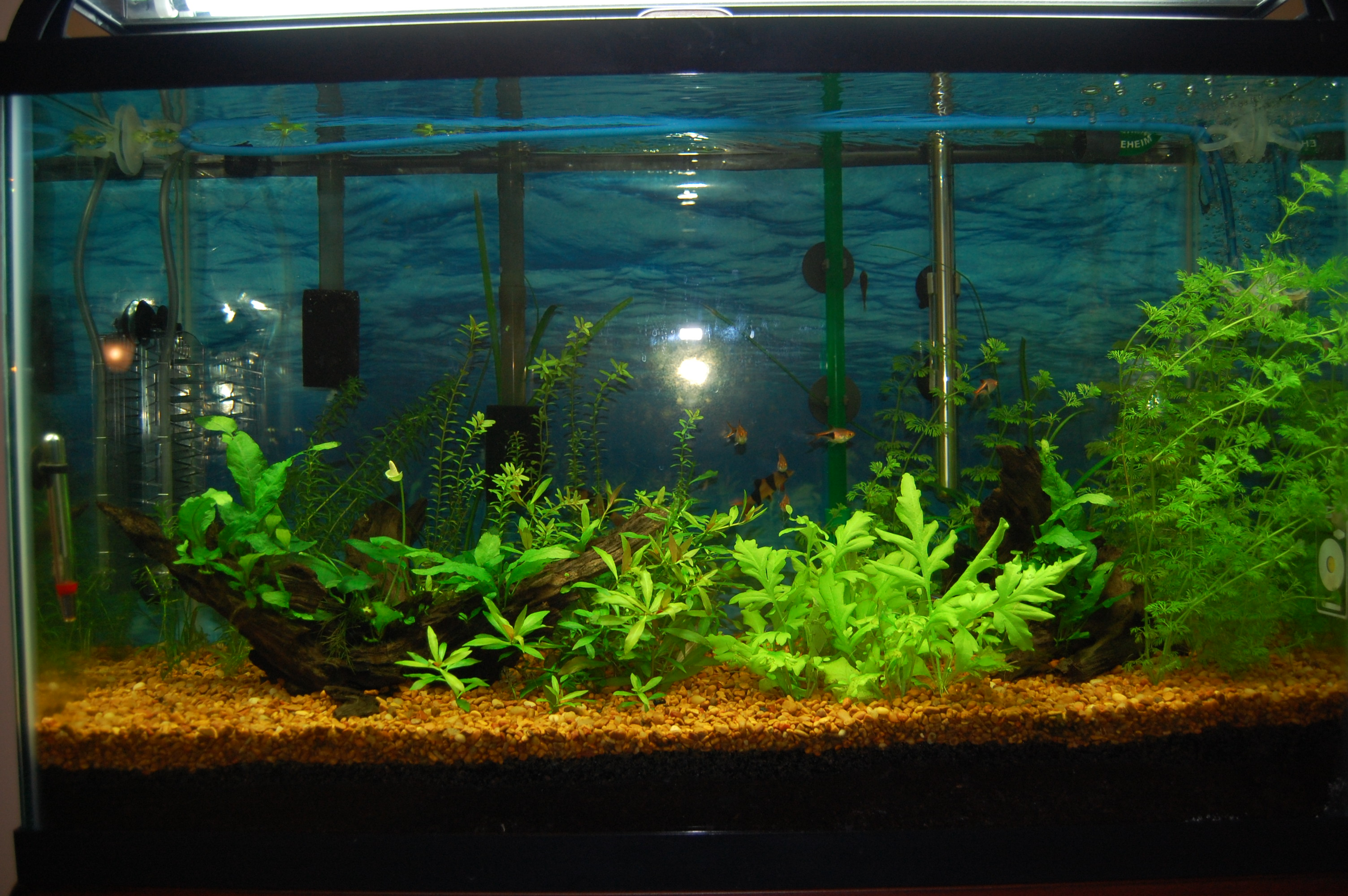 File Fresh Water Aquarium 2013 01 20 7064 Jpg