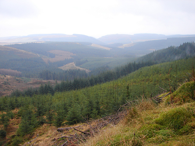 Hafren Forest - geograph.org.uk - 1125884