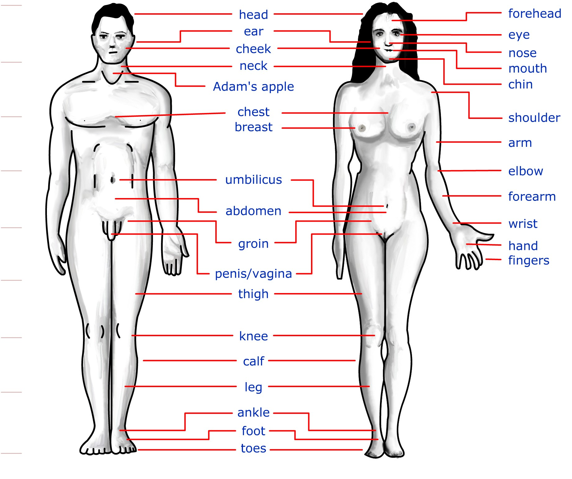 Filehuman Body Featuresg Wikimedia Commons
