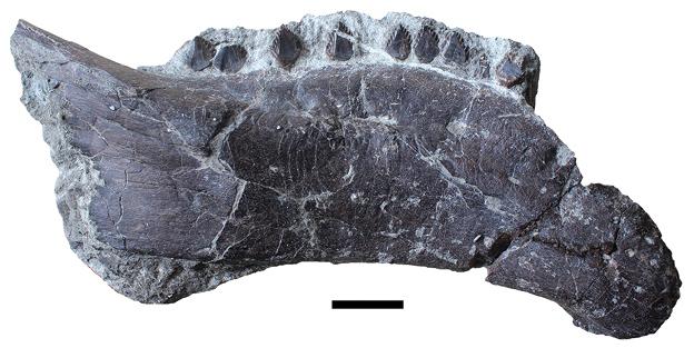 Hungarosaurus.jpg