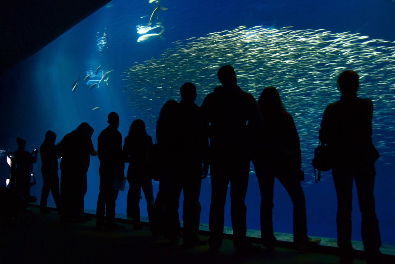 File Interior Monterey Bay Aquarium By Cam
