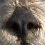 Kalan's nose.jpg