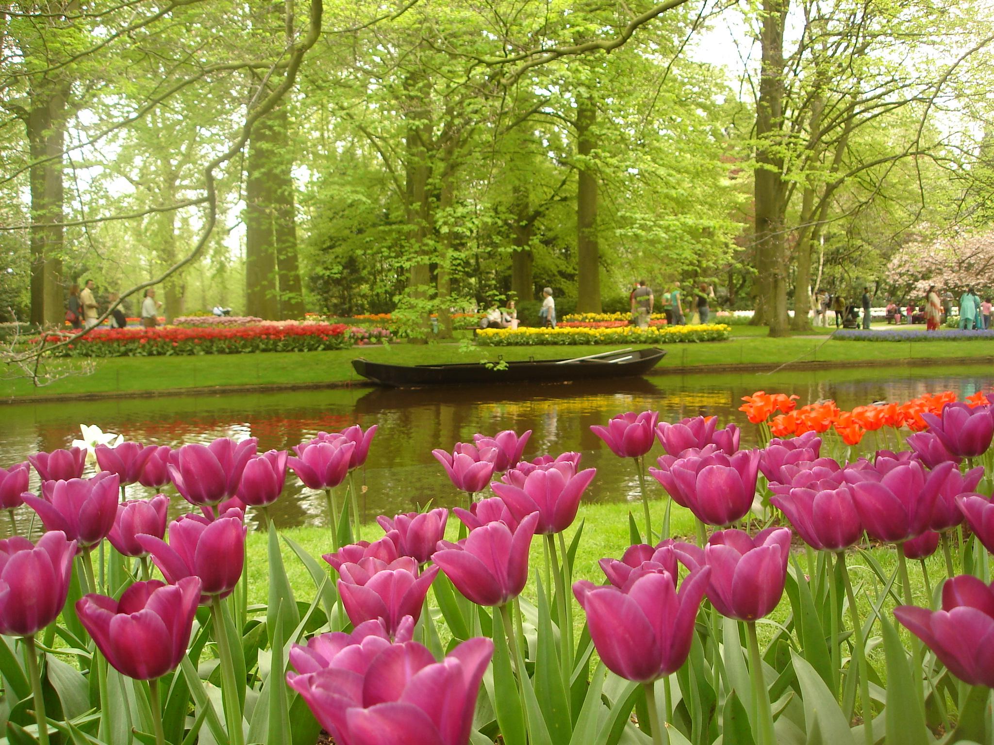 File keukenhof may2006 jpg wikimedia commons - Jardines de tulipanes en holanda ...