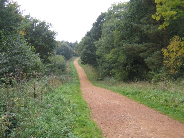 Maulden Wood, Beds - geograph.org.uk - 64554